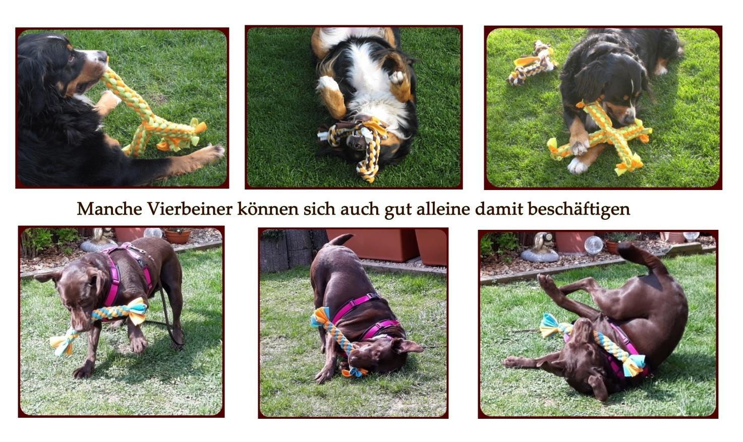 Tauziehen und Zerrspiele mit dem Hund richtig spielen