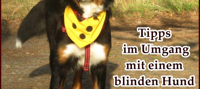 Tipps und Erfahrungen im Umgang mit einem blinden Hund